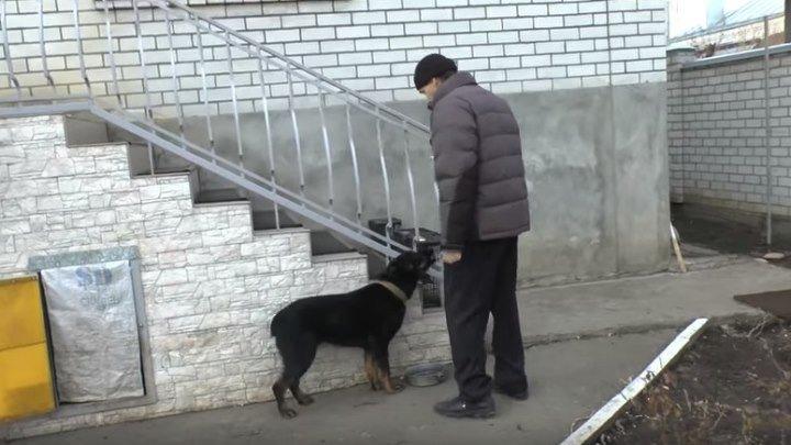 """Собака не ест пока хозяин не скажет """"Приятного аппетита"""""""