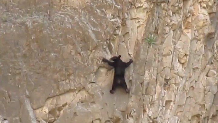 Не знал я, что медведи так шустро по скалам лазают...
