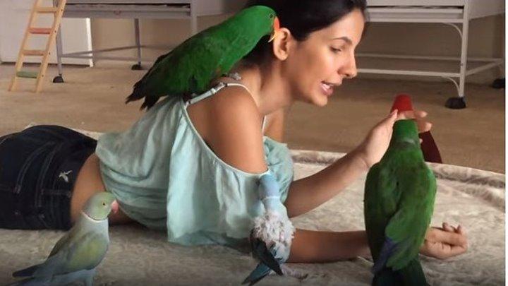 Девушка и попугаи, удивительное видео