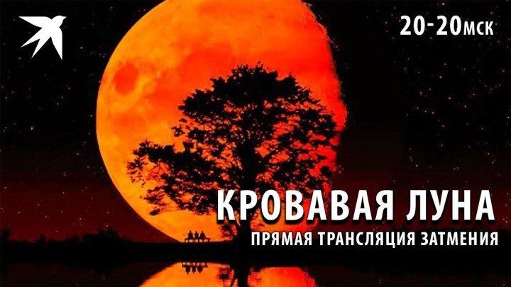Кровавая луна зависла над Землей