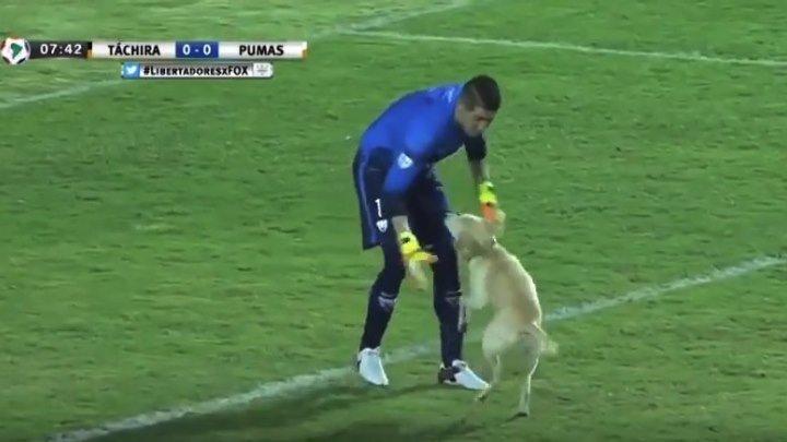 Очень довольная собака на футбольном поле!