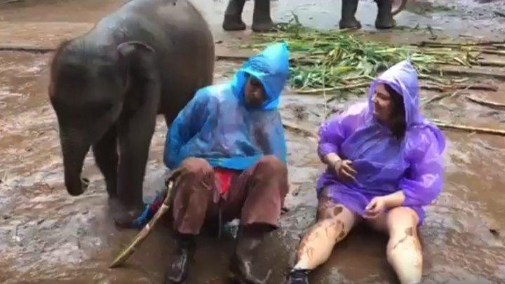 Слоненок и туристка валяются в грязи!