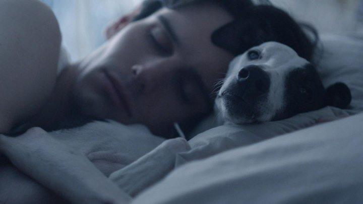 «Собачья еда» / Dog Food (2014 ᴴᴰ) Короткометражка, Ужасы, Триллер, Драма
