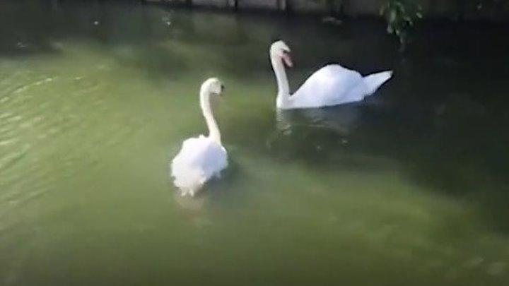 Животные которые увидели своих близких после долгой разлуки...