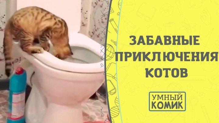 Забавные приключения котов