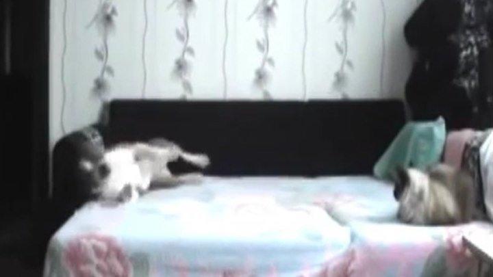 Смешной пес на диване! Что бывает когда собаку оставляют дома с котом