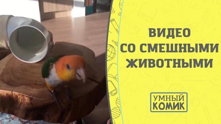 Видео со смешными животными