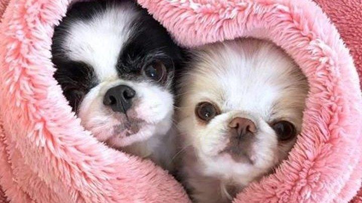 Утренний позитив ...Вот зачем малышам нужны собаки 🐶 💕 💖