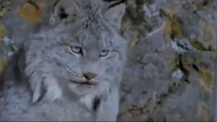 «Последний охотник» Захватывающий, приключенческий фильм для всей семьи в мире природы