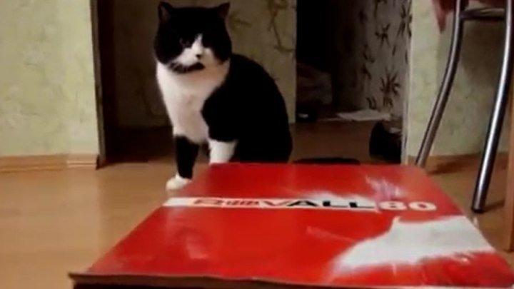 Два кота и только одна коробка