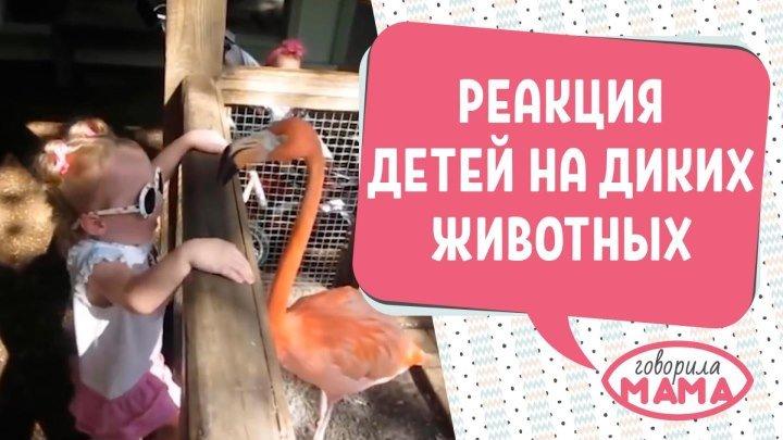 Первая встреча детей и диких животных