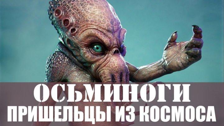 Осьминоги — пришельцы из космоса. Предположения ученых