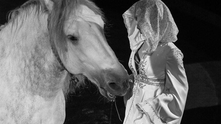 """""""Cвобода лошадей"""" Мурад Хадыров"""