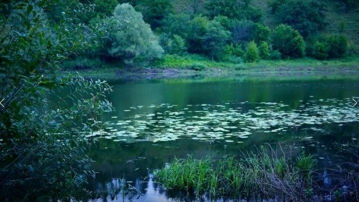 КРАСИВОЕ ВИДЕО! Утро, звуки природы, река, старое русло, пение птиц, релакс