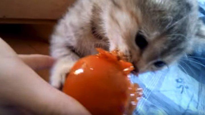Котенок с аппетитом лопает хурму...))