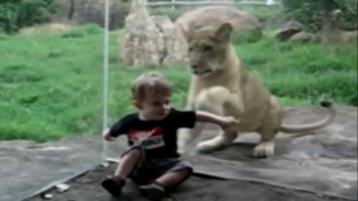 Детки и животные, прикольная подборка!