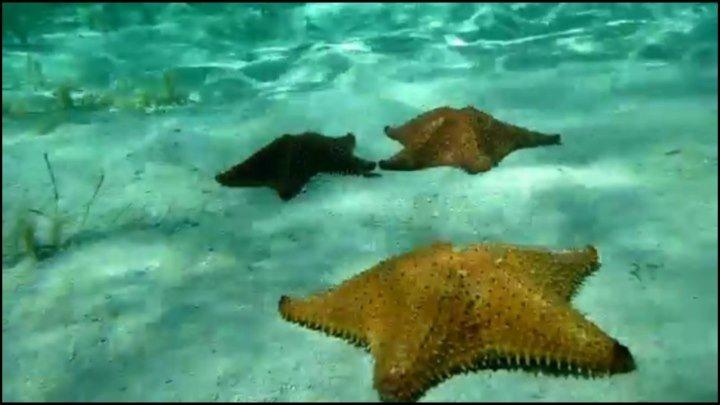 В поисках звезд (Доминикана, остров Саона)