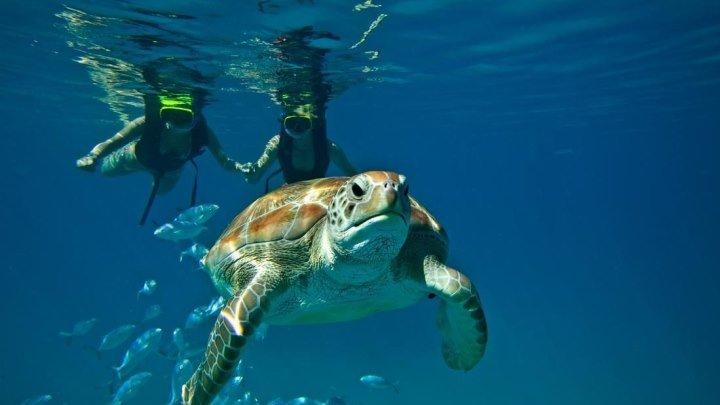 Заплыв с черепахами (остров Барбадос)