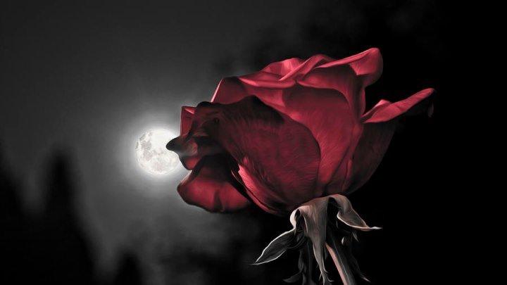 Евгений Чужой Шипы и розы