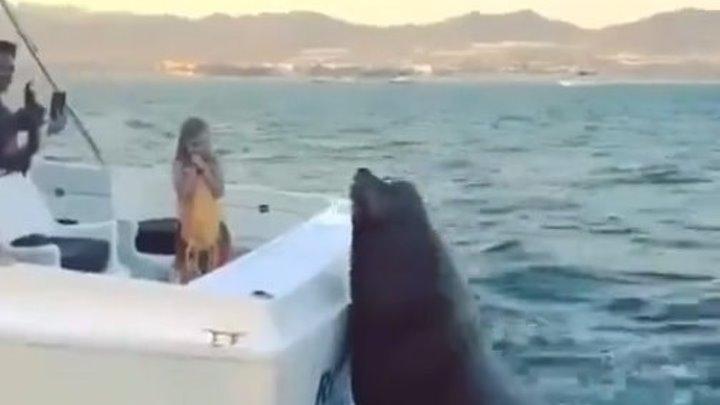 Рыбки хочет..