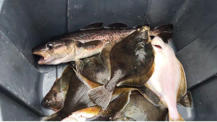 Рыбалка! Магадан. Охотское море (июль 2018). Съёмки с капитаном. Много рыбы.