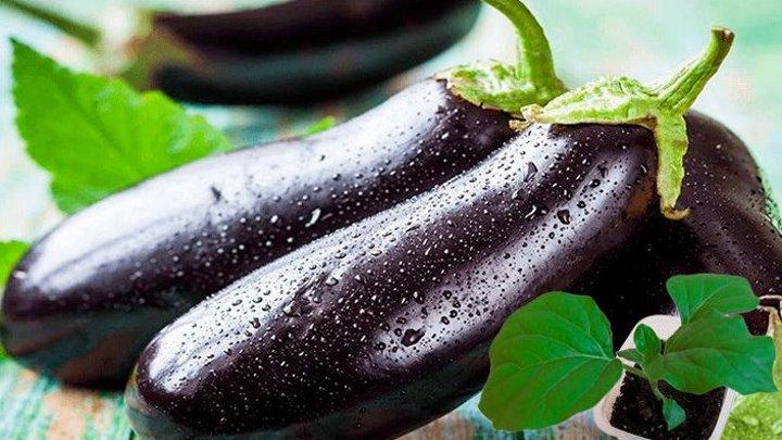 Как вырастить крепкую рассаду баклажан
