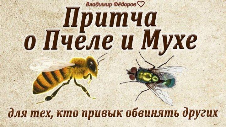 Притча о пчеле и мухе для тех, кто привык обвинять других