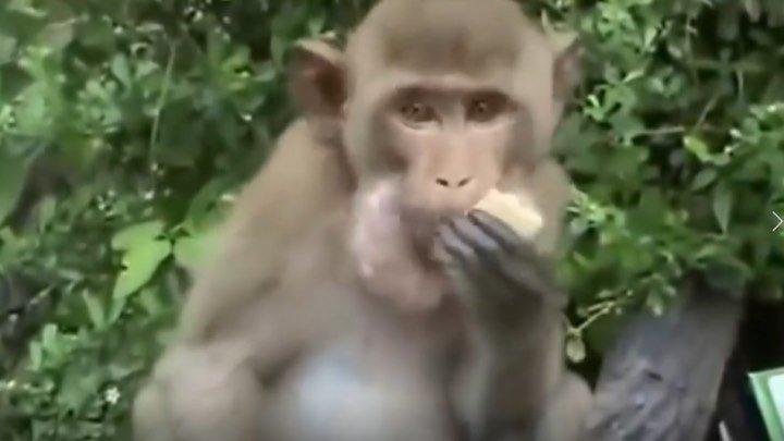 Смешные обезьяны! Приколы про обезьян!