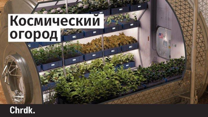 Космический огород, светящиеся бактерии и пешеходное движение