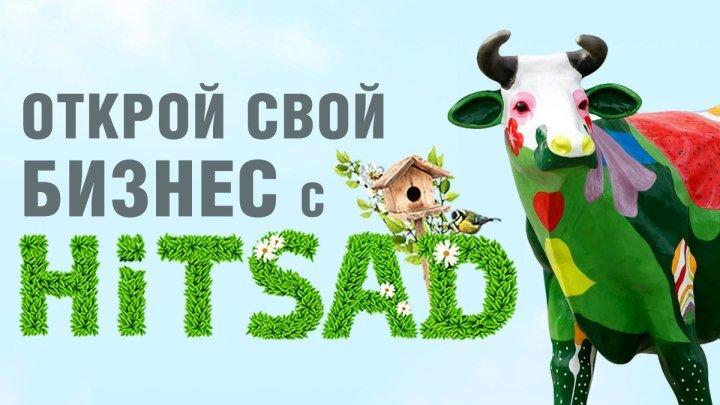 Франшиза от Hitsad.ru