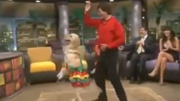 Собака танцует индийский танец! Вот это да!!!