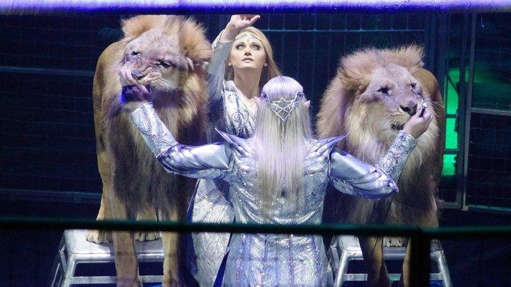 В Курском цирке премьера программы «Братство льва»