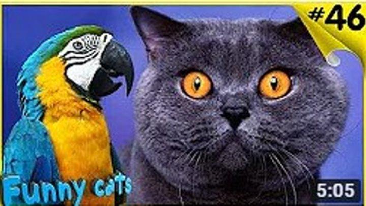 Кошки и Попугаи! Смешная Видео Подборка!