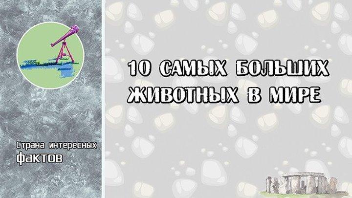 10 САМЫХ БОЛЬШИХ ЖИВОТНЫХ В МИРЕ