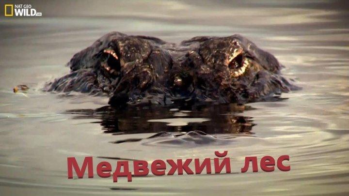 Живой или мертвый (2012)