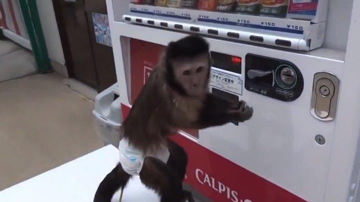 Самостоятельная ОБЕЗЬЯНКА покупает сок...!