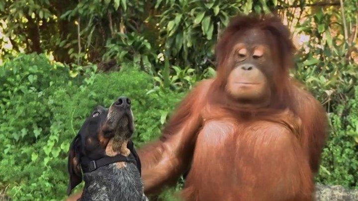 Животные тоже могут ДРУЖИТЬ...!
