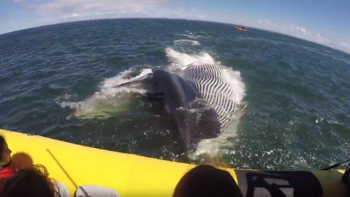 Огромный кит проплыл прямо под лодкой с туристами!