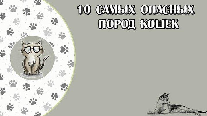 10 САМЫХ ОПАСНЫХ ПОРОД КОШЕК