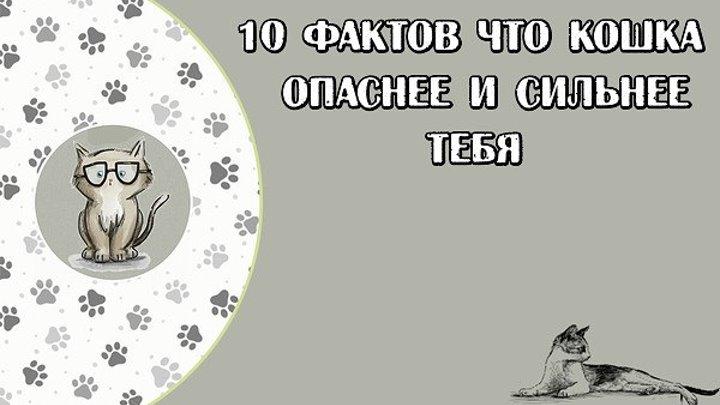 10 ФАКТОВ ЧТО КОШКА ОПАСНЕЕ И СИЛЬНЕЕ ТЕБЯ