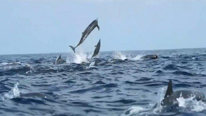 Морские акробаты! Великолепные дельфины!