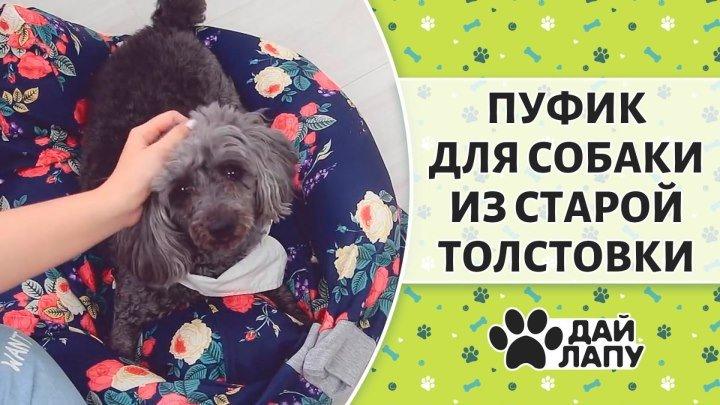 Лежак для собаки из ненужной толстовки