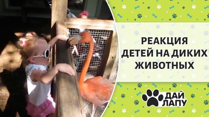 Реакция маленьких детей на диких животных