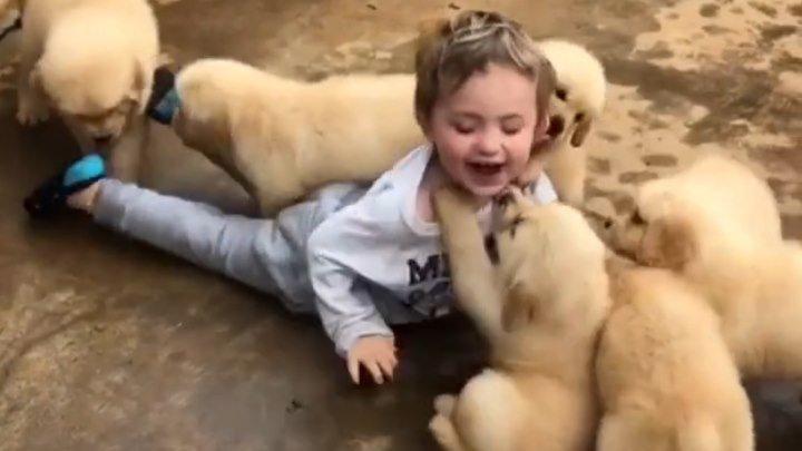 Милота этих малышей просто зашкаливает