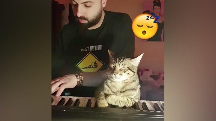 Когда с хозяином на одной волне! Музыкальной!!!