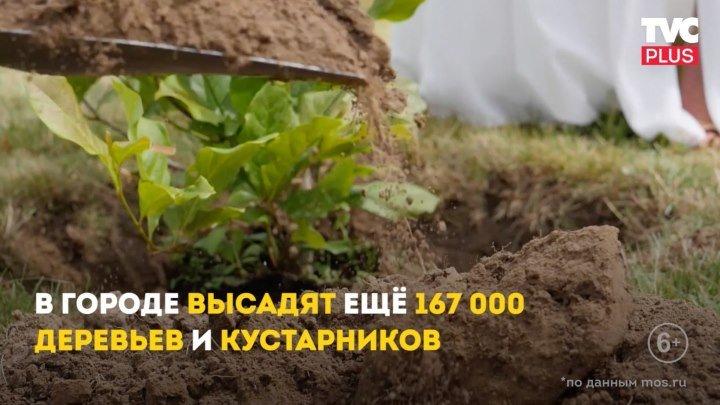 Программа «Миллион деревьев»