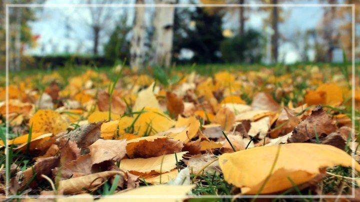 Осень в любимом парке и дворе на 1 мая