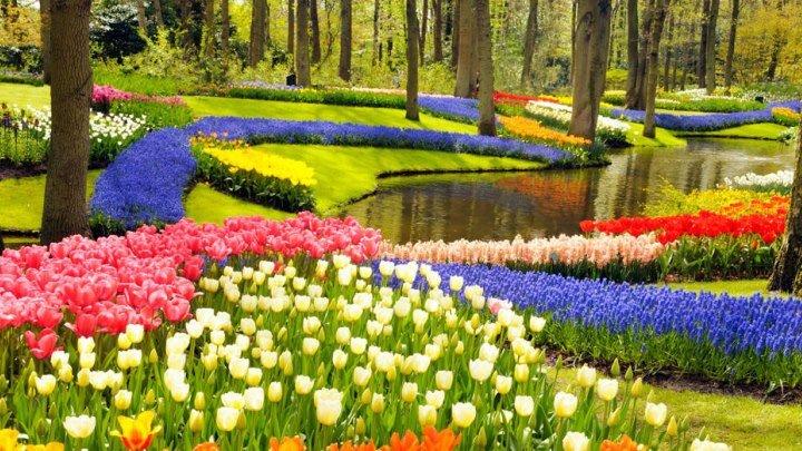 Парк тюльпанов Кекенхоф (Голландия)