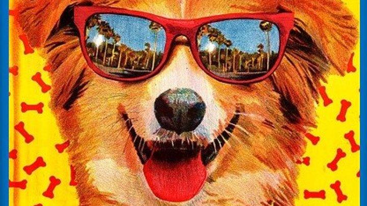Мой пес Бинго (1991) Комедия, приключения, семейный (WEB-DL-720p) MVO Синди Уильямс, Роберт Дж. Стайнмиллер мл., Дэвид Френч, Курт Фуллер, Гленн Шэдикс, Джанет Райт, Уэйн Робсон