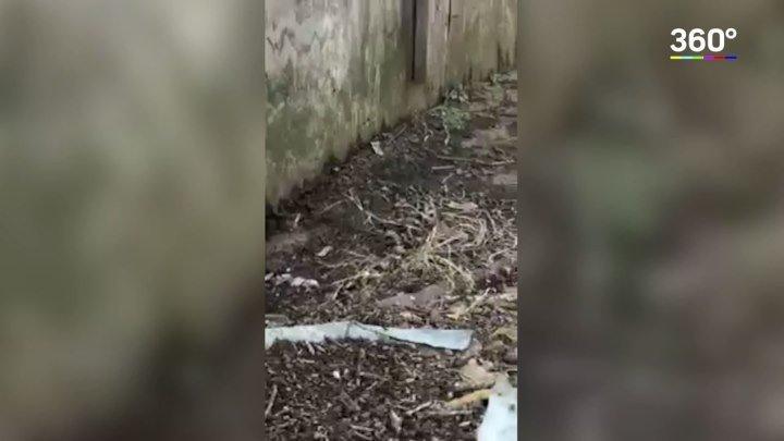 Нашел логово змей